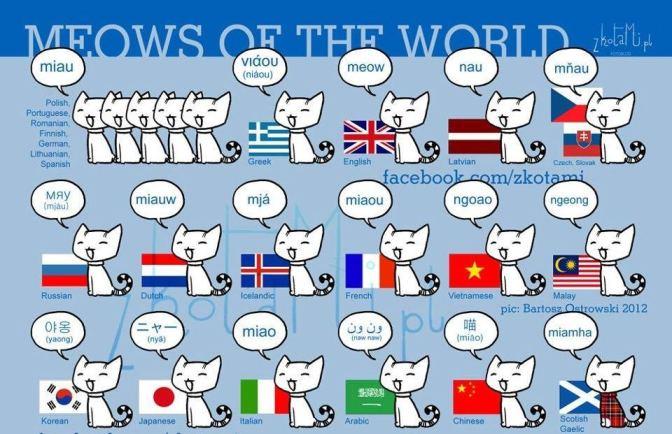 Mjau na jezicima sveta