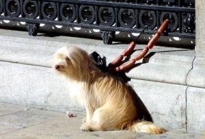 Spanske izreke: Atar los perros con longaniza