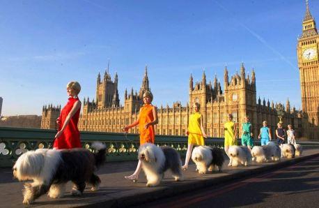 Dulux English Sheepdogs