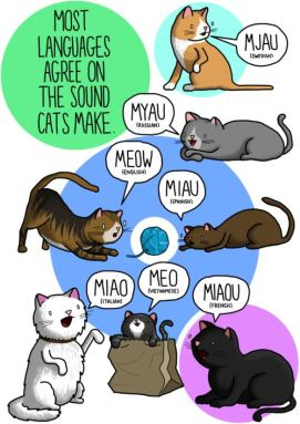 Languages of cats
