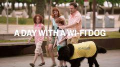 Best ads, A day with a Wi-Fi dog