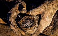 Iranac Amou Haji puši lulu punjenu životinjskim izmetom